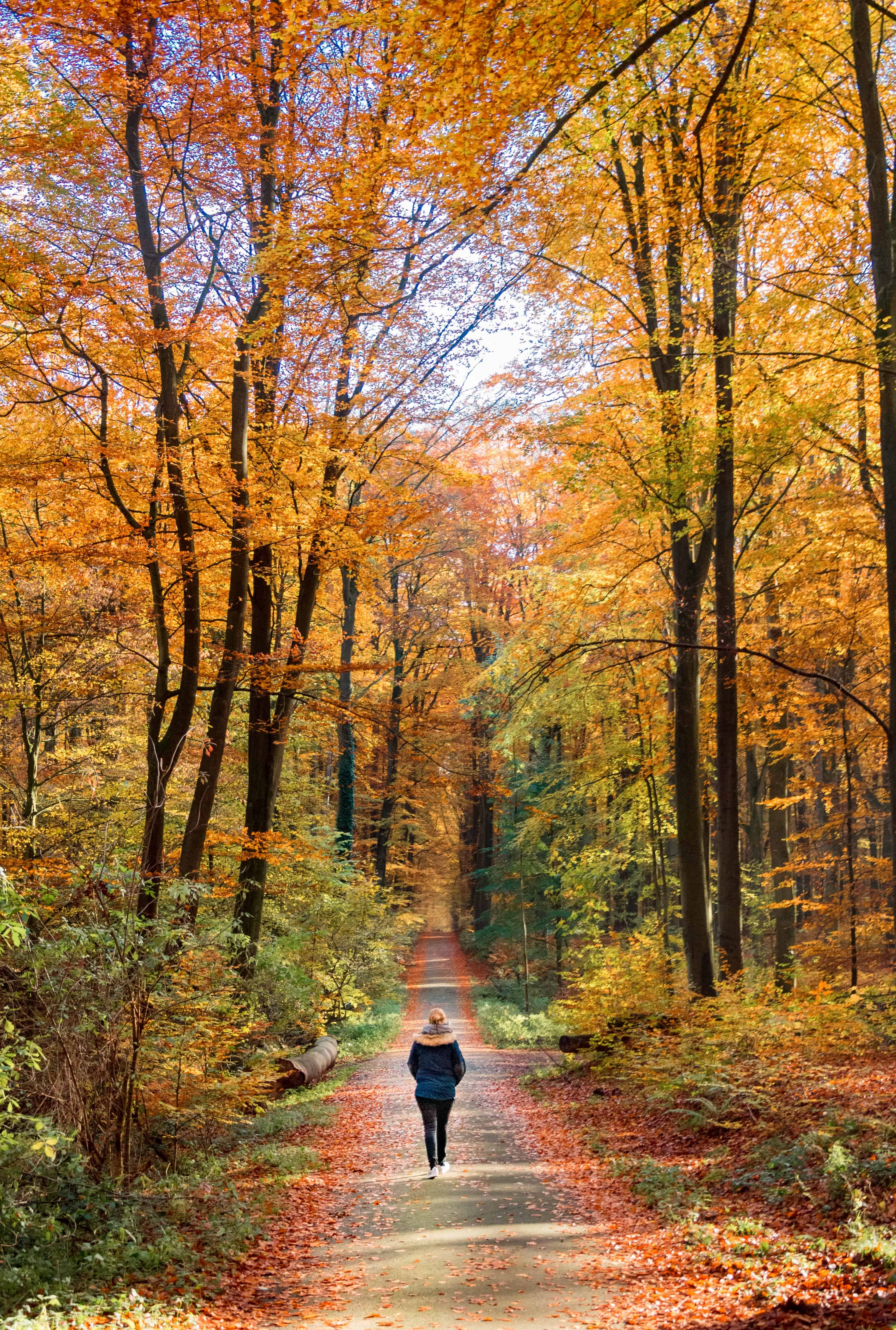 Solo female traveller admiring the fall leaves and the colours of the trees in a national park.