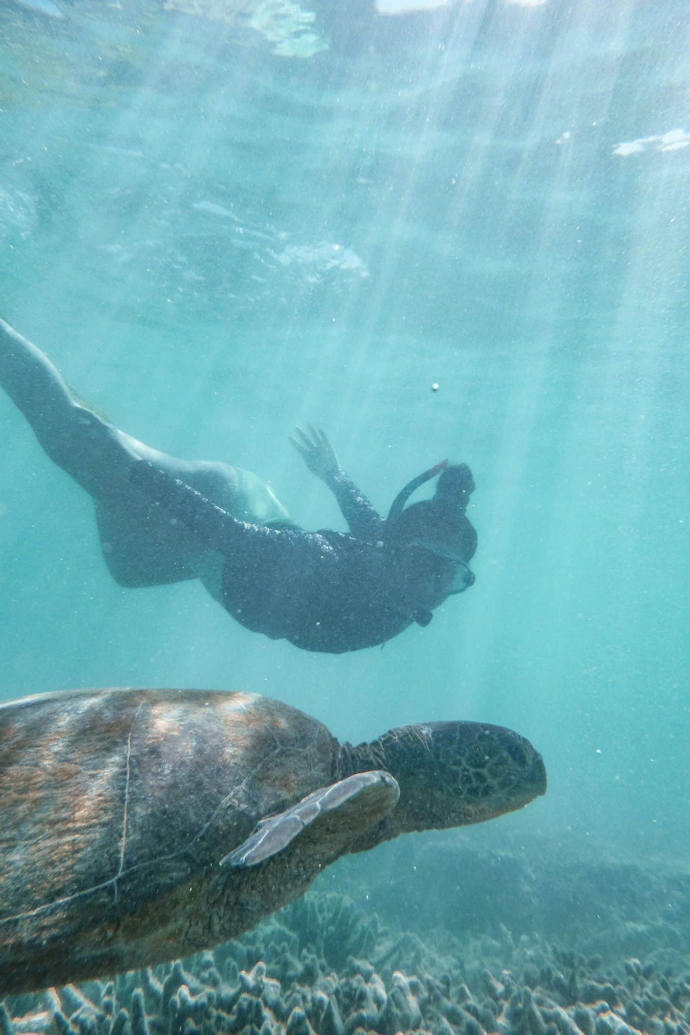 Swimming and snorkelling with a Green Sea Turtle on the Great Barrier Reef in Queensland #swimmingwithturtles #heronisland #greatbarrierreef